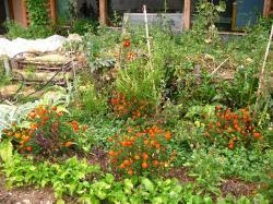 Alternatives semer des fleurs pour proteger votre potager 4